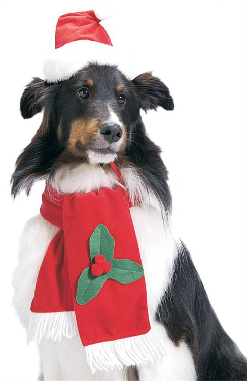 Santa Dog Costume - Santa Hat and Scarf